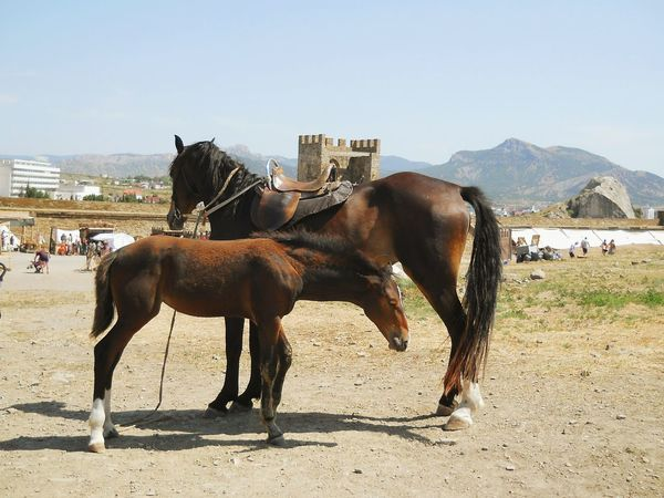 Horses DVD_picture Природа Russia Россия лошадь Крым Crimea Warm Warm Colors лето Summer Mother And Son Domestic Animals Horse Mammal Animal Themes Jockey Sky Outdoors Day
