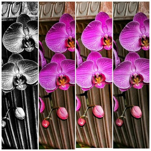 Steps to both ends Enjoying Life Flower Photography Flowers In Rain Flowers, Nature And Beauty Self Portrait Around The World Purple Flower
