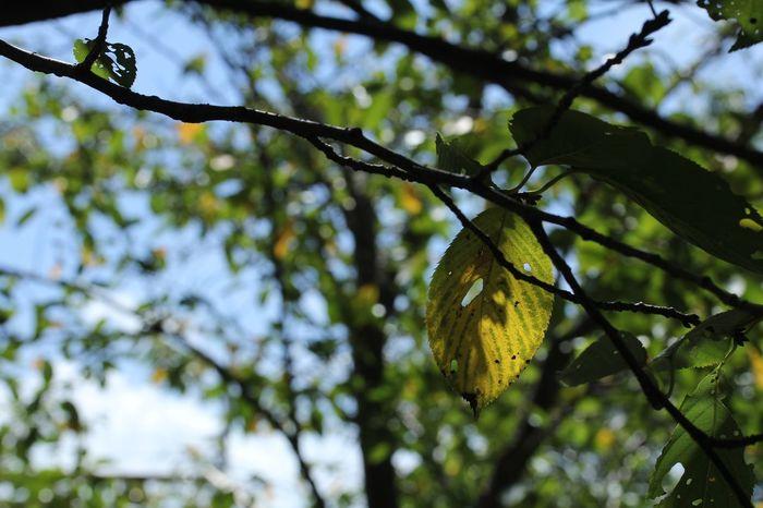 控えめに秋の足音 枯れ葉 Tree Branch Fruit Leaf Close-up Sky