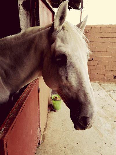 Horse, Pony, Colt, Animal, Animals, Mane, Mammal ,sad, Dark, Unhappy, Cry, Nature