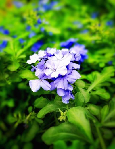 Beautifully Organized Beauty In Nature Purple Nature Plant