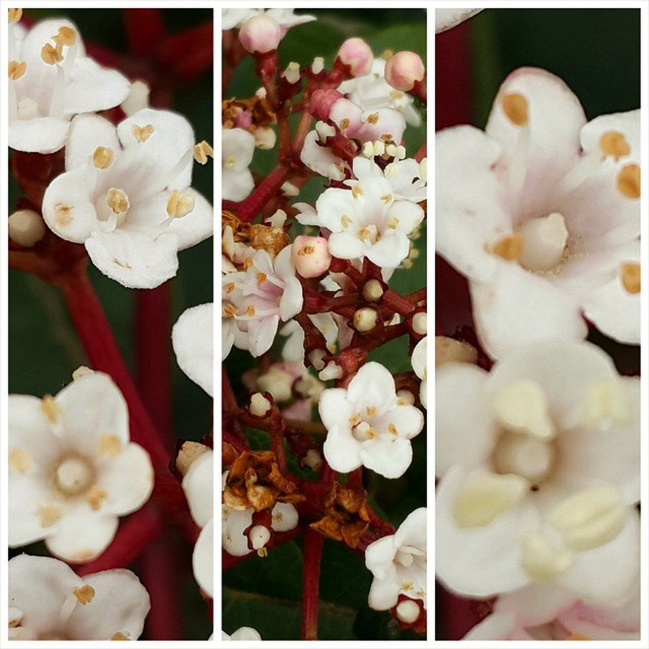 flower, freshness, no people, food, food and drink, collage, variation, close-up, indoors, fragility, flower head, sweet food, nature, beauty in nature, day, ready-to-eat