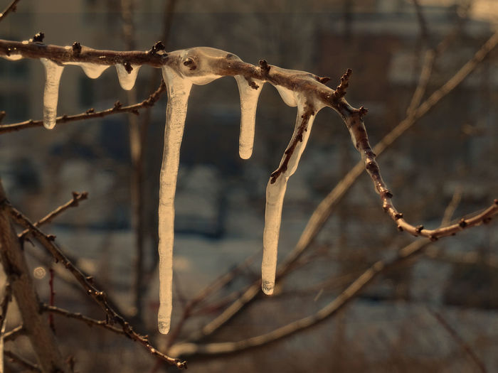 Day Ice Nature
