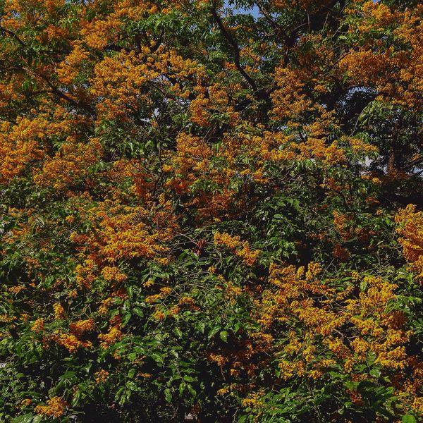 April Flower Summer Eyeem Philippines UST Universityofsantotomas Flowers EyeEm Nature Lover
