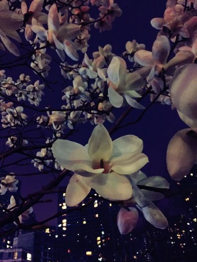 Spring Night Flowers Night Lights Light And Shadow Depressing Day