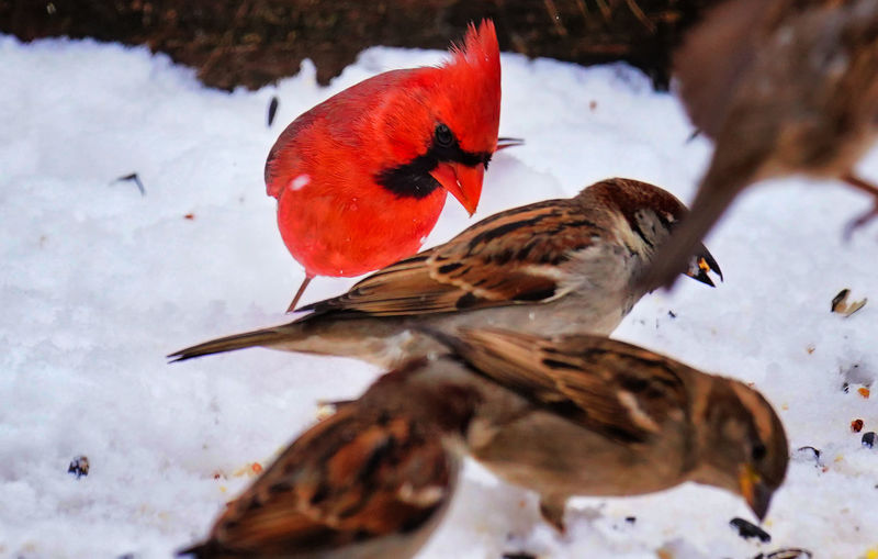 High angle view of birds in snow
