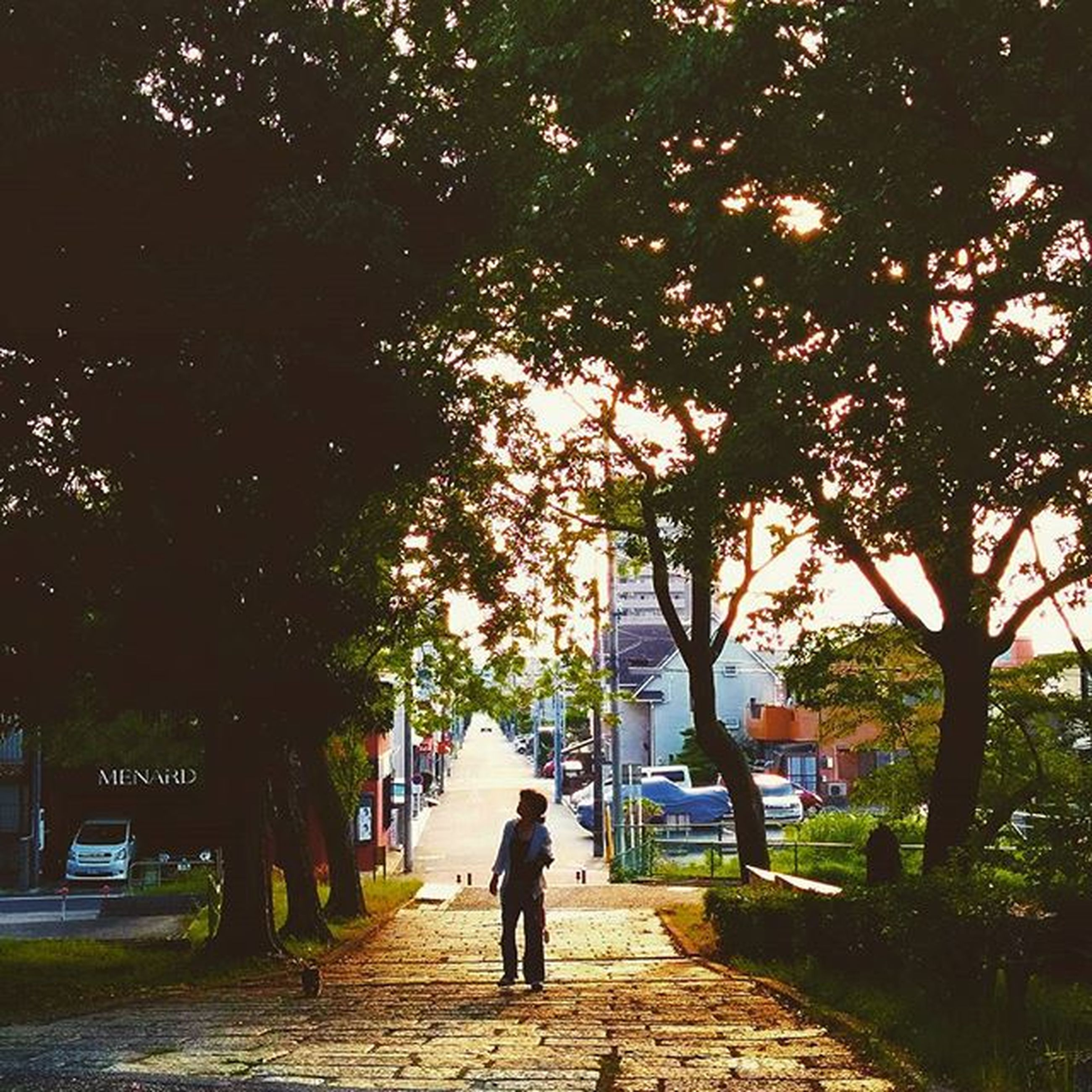 tree, lifestyles, walking, rear view, full length, street, person, men, the way forward, leisure activity, building exterior, footpath, architecture, sunlight, sidewalk, built structure, city, city life