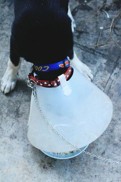 Eat Rice Food Dog Prevent Neck Throat Strap Dog Black Dog Day Low Section