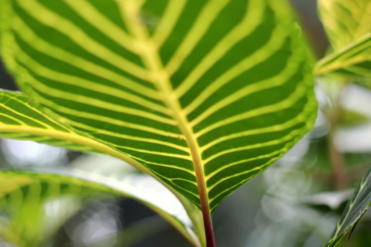 Beauty In Nature Close-up Day Focus On Foreground Fragility Freshness Green Color Growth Leaf Leaves Natural Pattern Nature No People Outdoors Palm Leaf Palm Tree Pattern Plant Plant Part Selective Focus Tranquility Vulnerability