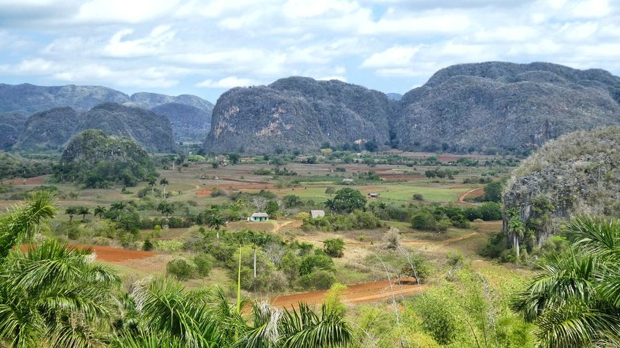 amazing landscape of Viñales with mountain range of Mogotes and tobacco fields in Cuba - world heritage Mountain Range Tabacco Field Palm Trees Scenic Landscapes EyeEm Nature Lover High Angle View EyeEm Selects EyeEm Gallery Travel Destinations Travel Colorful View Amazing Nature Summer 2018 Vacation Time Viñales Valley, Cuba Mogotes Tree Rural Scene Agriculture Field Crop  Farm Sky Landscape Cloud - Sky Plantation Cultivated Land Terraced Field Agricultural Field Patchwork Landscape The Great Outdoors - 2018 EyeEm Awards
