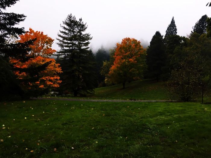 Rainy hike thought the Washington Park Tree Autumn Nature Growth No People Beauty In Nature Grass Landscape Outdoors Forest Scenics Leaf Day Fog Portland, OR Zoo Park Washington Park Iphone 6