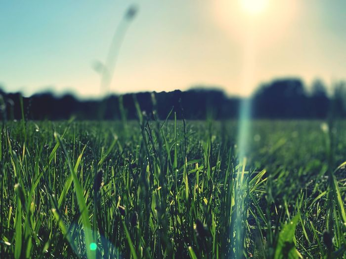 Crops growing on field against bright sun