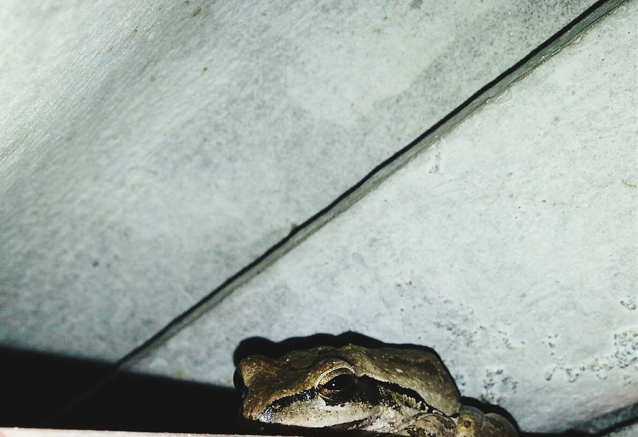 Low Angle View Of Frog Under Wooden Plank