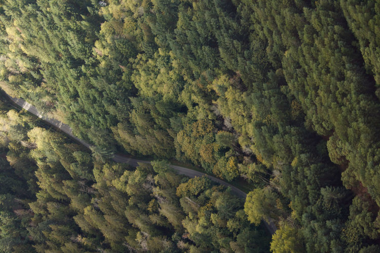 Road In The Forest Aerial View Beauty In Nature Forest Green Color High Angle View Landscape Nature No People Outdoors Road Trip Scenics Tree