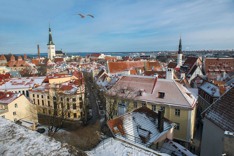 panoramic view of Tallin's Old Town Cityscape Estonia Panoramic Tallinn Winter Travel Animal Themes Architecture Bird Building Exterior Built Structure City Cityscape Cityskyline Day High Angle View Nature No People Old City Outdoors Residential Building Roof Sea Sky Tiled Roof  Travel Destinations