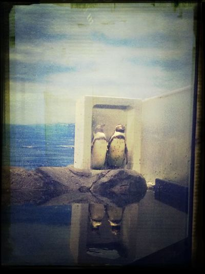 penguin 水族館 Penguin