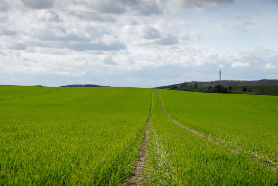 scenic view of agricultural field against sky Agricultural Land Agriculture Beauty Blue Sky Clouds And Sky Copy Space Day Daytime Field Green Grass Landscape Scenic View Tracks On Field
