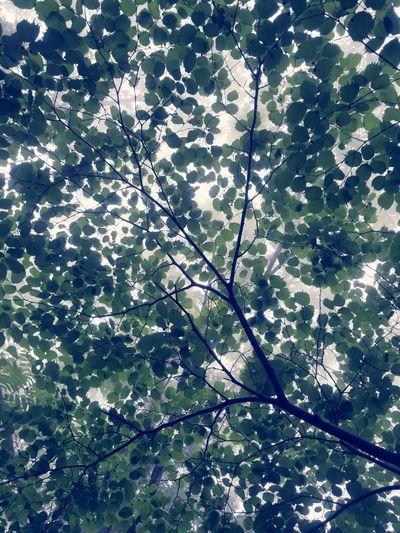 tree Sky Leaves