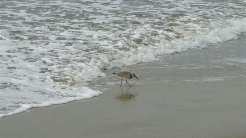Landscapes With WhiteWall Sand Piper Alone One Beach Running Water_collection Waves, Ocean, Nature