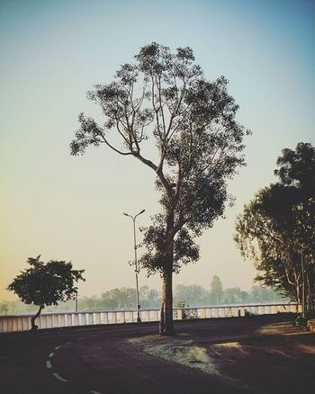 150th Post Completed😄😄 This pic always make me remember one thing How to stand alone EVERYTIME When others have no Time for your Problems Soi Soi_today Igphotomagic Igworldclub Instaudaipur UdaipurBlogs True_photo_lover Treemagic Capture_india Oye_my_click MyUdaipur Treelove Treelife Mylife Gogreen 🎋🎋💐 Ig_today Ig_today Igers_wanderlust Stories_of_India photographers_of_india OutbounderLife