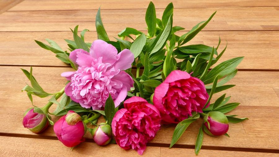 Pink Peonies on a Wooden Surface Still Life Photography Still Life Lifestyle Peonies Bloom Peonies In Bloom Flowering Plant Flower Freshness Plant Leaf Plant Part Close-up Pink Color Beauty In Nature Petal High Angle View Flower Head