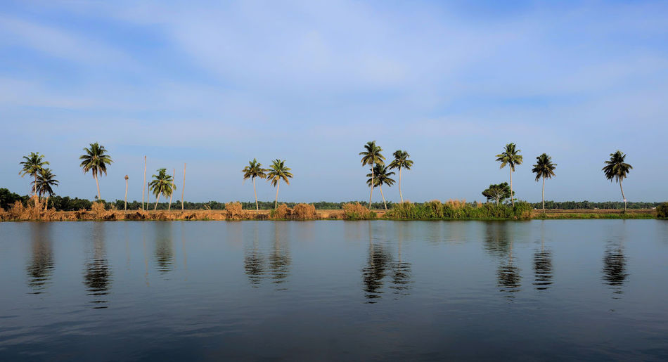 view from boat house Water Tree Palm Tree Sky Plant Tropical Climate Tranquility Beauty In Nature Scenics - Nature Reflection Tranquil Scene Waterfront Nature Cloud - Sky Lake No People Growth Day Idyllic Outdoors Coconut Palm Tree Kerala Alleppey