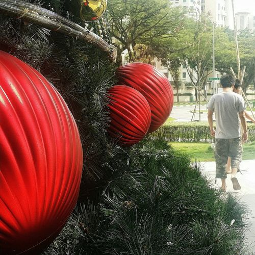 It has become increasingly difficult to take photos of my teenagers Baubles Christmas Tree My Sons 21 November 2015 Singapore Streetphotography