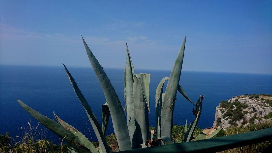 Close-up of cactus in sea against blue sky