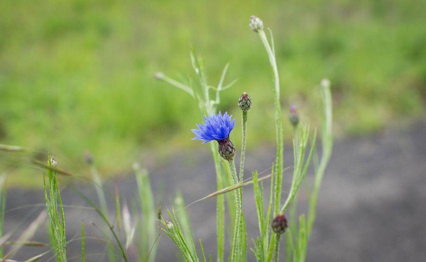 One of a kind http://www.rhme.de/one-kind Flower Lonely Nikon D5200 Violet