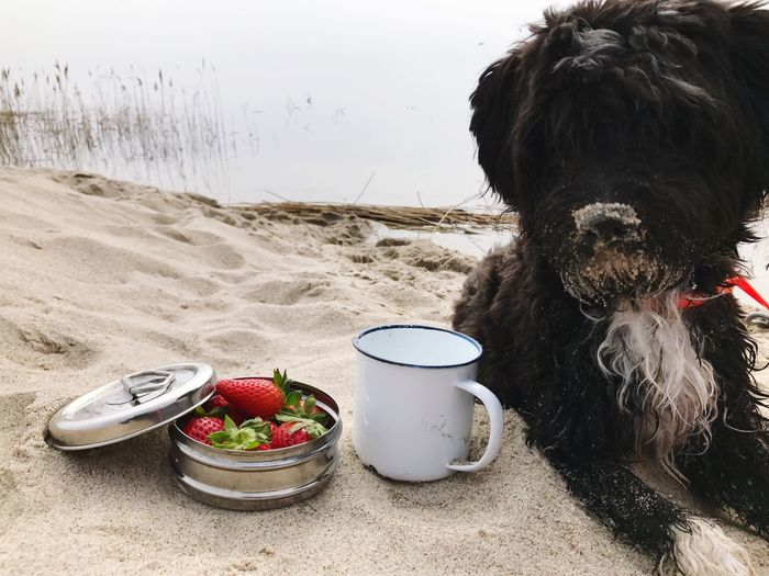 Zuckerschnute Domestic Animals Mammal Pets One Animal Animal Themes Dog Beach Livestock Water No People Outdoors Sea Nature Sand Day Strawberry Strawberries Erdbeeren Close-up Food Food And Drink Ostsee Long Goodbye