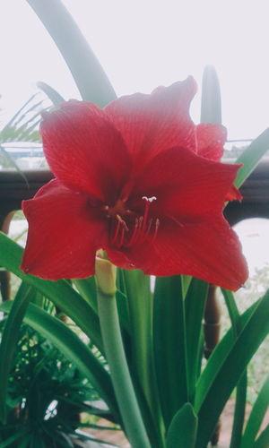 Flower Hoa First Eyeem Photo