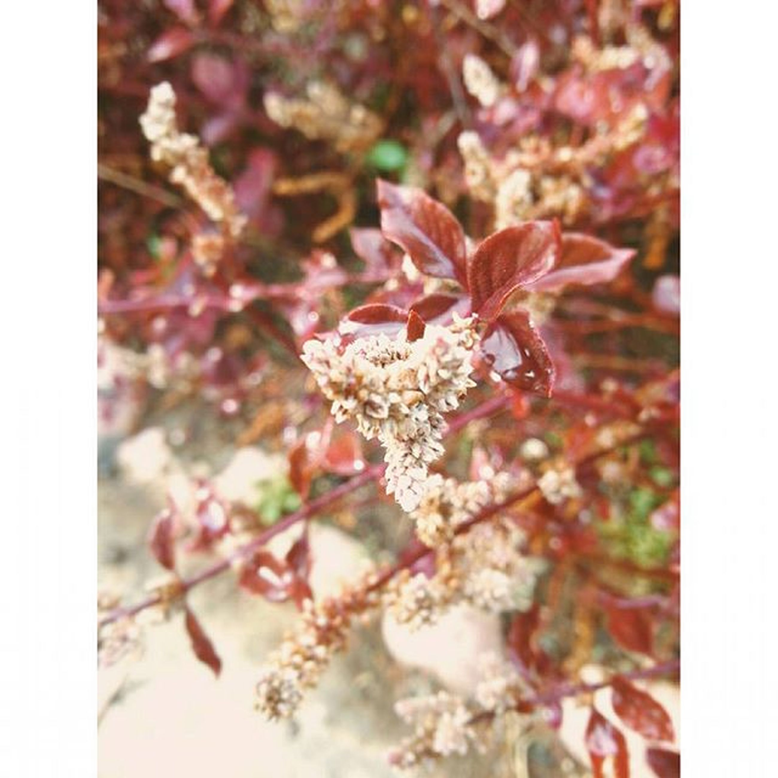 flower, freshness, transfer print, fragility, growth, beauty in nature, auto post production filter, petal, nature, close-up, blossom, branch, focus on foreground, flower head, pink color, season, tree, in bloom, blooming, selective focus