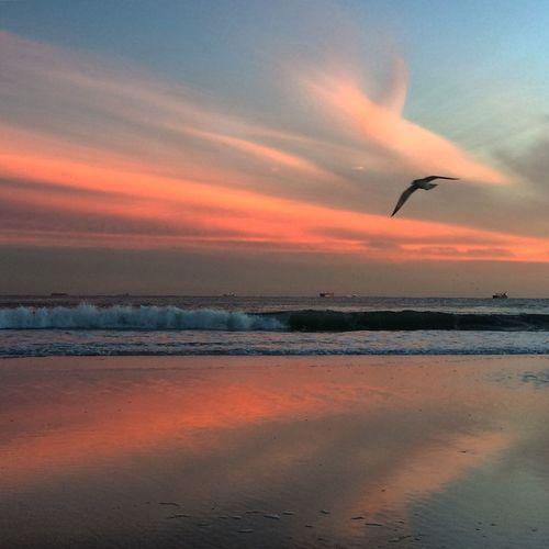 Sunset At Long Beach, NY EyeEm Best Shots Beautiful Sky Sky Collection Splendid_reflections Visualmagic EyeEm Sunset Eyem Best Shots Nature_collection Popular Photos