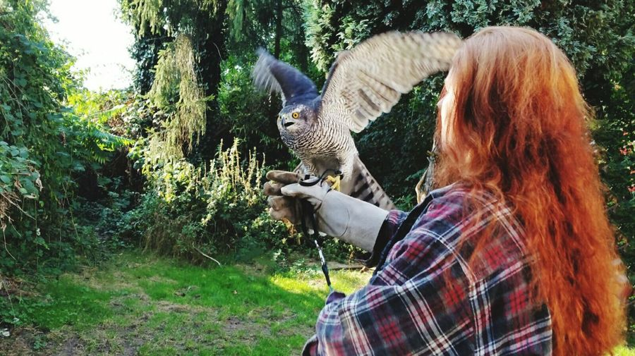 Woman Stroking Hawk