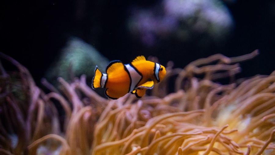 Nemo Animals In