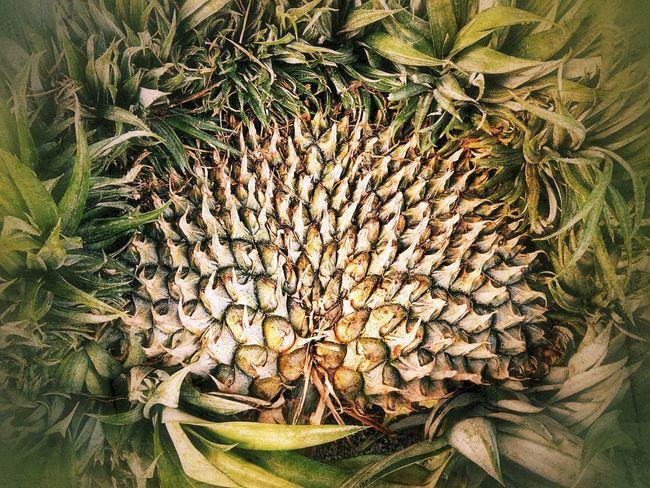 Close Up Close Up Photography Close Up Collection Close Up Fruit Pineapple Pineapple Fruit Fruit Fruit Photography Fruit Collection Nature Flower