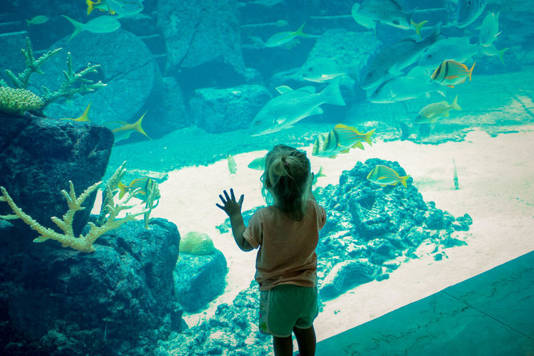 Rear view of girl looking at fish at aquarium