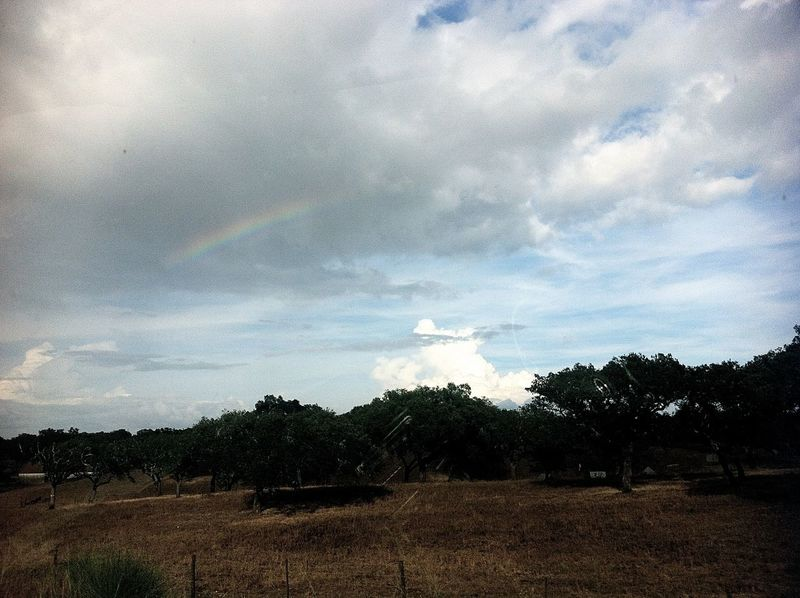 Beauty In Nature Cloud - Sky Day Landscape Nature Rainbow Sky Tranquil Scene Tranquility Tree