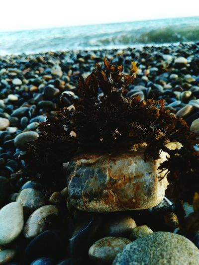 Sea Nature Water Sea Life Day Beach Coral likeforlike #likemyphoto #qlikemyphotos #like4like #likemypic #likeback #ilikeback #10likes #50likes #100likes 20likes likere Rock - Objectsummer No People Close-up Pebble Beauty In Nature Outdoors UnderSea First Eyeem Photo