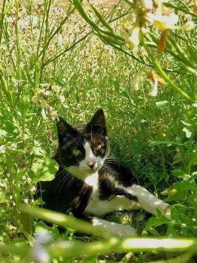 Le chat ! Cat Animal Themes Feline Domestic Cat Animal Plant One Animal