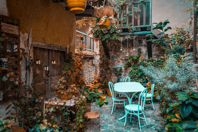 Potted plants on table against building