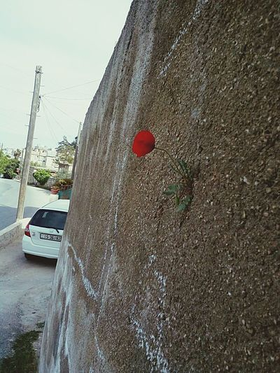 Outdoors Sky Flower Red Flower Wall Flower On The Wall Challenge Miracle