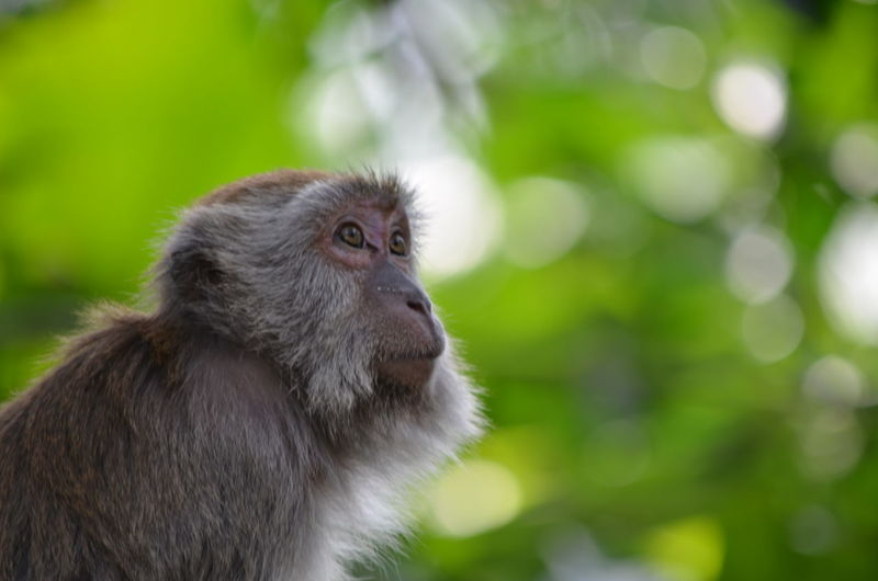 Close-Up Of A Monkey Looking Away