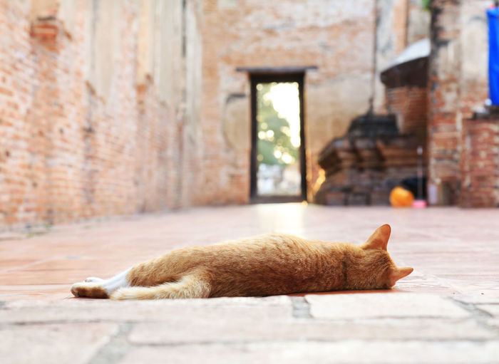 Cat sleeping on a wall