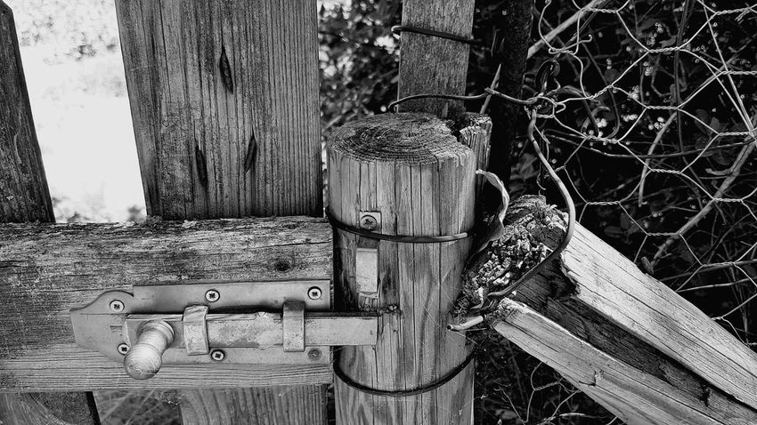Wood - Material No People Outdoors Day Tree Nature Close-up Experimental Experimental Photography Focus Focus On Foreground Fence Old Construction Blackandwhite Black & White Black And White Photography France Holidays First Eyeem Photo Garden Another Angle Another View