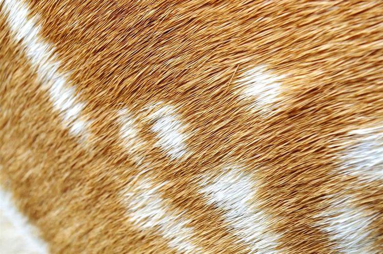 Precision Animalprint Deer