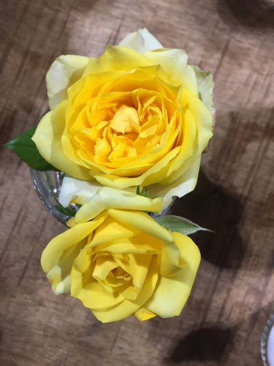 High angle view of yellow rose on table