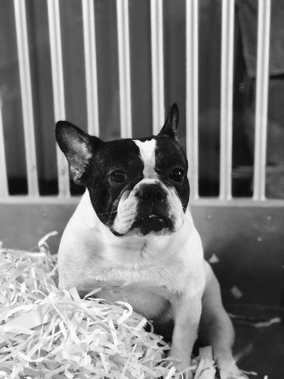 One Animal Pets Domestic Animals Dog Canine Animal Themes Domestic
