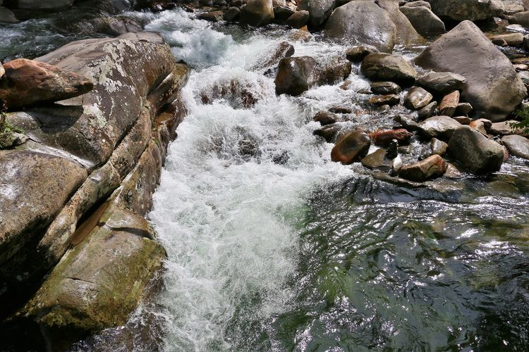Stream in Great Smokey Mountains Water Motion Rock Beauty In Nature Rock - Object Flowing Water Solid Nature River Scenics - Nature Flowing Forest No People Land Stream - Flowing Water Outdoors Waterfall