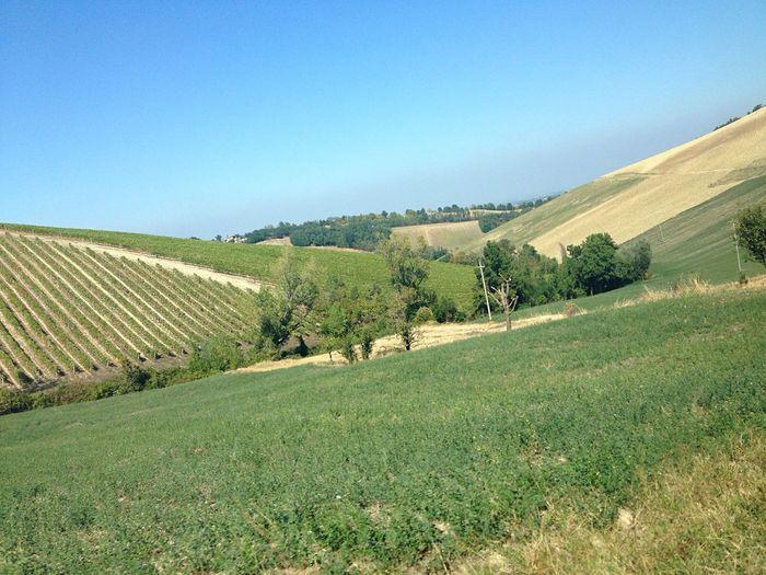 Felino Emiliaromagna Parma Emilia Romagna Colli Verde Tree Colors Colori